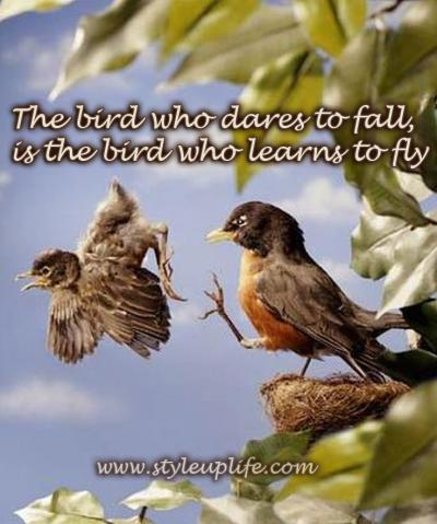 FallingBabyBird